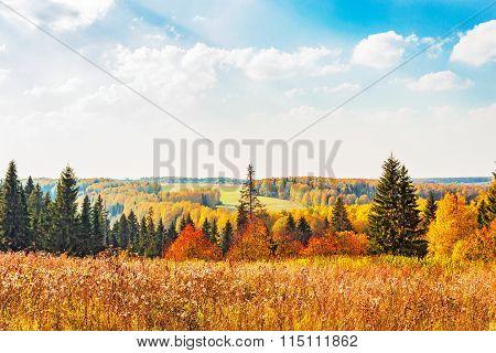 bright autumn forest