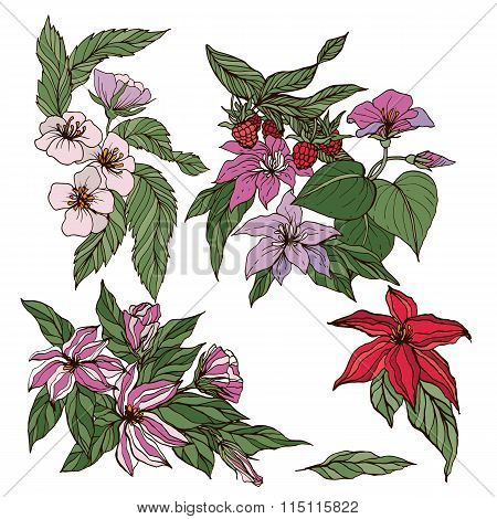 Vector collection of hand drawn flowers and berries