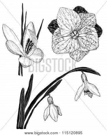 Spring Flowers In Sketch Style: Snowdrop, Crocus, Lilac Flower