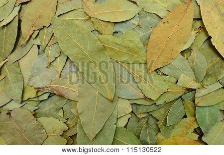 Laurel Leaves Texture