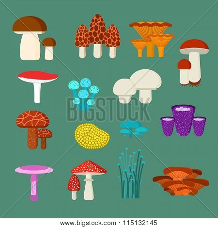 Mushrooms vector illustration set. Different types of mushrooms isolated on green background. Nature mushrooms for cook food and poisonous mushrooms flat style