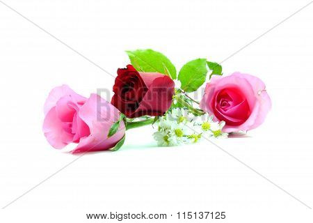 Two Pink Rose And One Red Rose In The Middle With Green Leaf On Isolated White Backgroundthree Red A