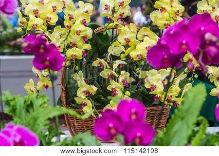 Yellow  Orchid On Bamboo Basket