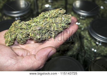 Hand Holding Marijuana Buds Up Close in Front of Jars