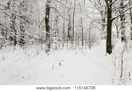 winter road .  snow