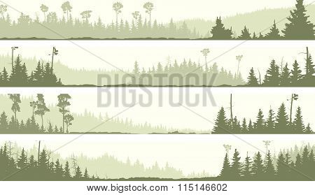 Vector Banners Of Misty Coniferous Forest With Glades
