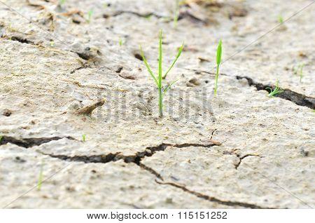 Small Plant Survive On A Drought Land -  Survival Concept