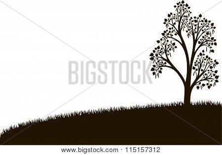 silhouette of birch tree with leaves at grass