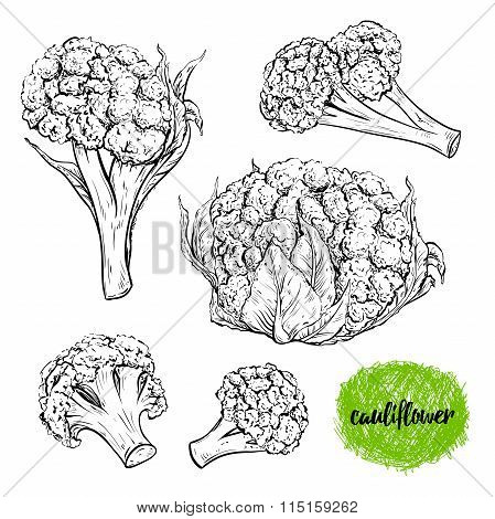 Cauliflower. Vintage collection of cauliflower in different angles. Isolated elements. Black and whi