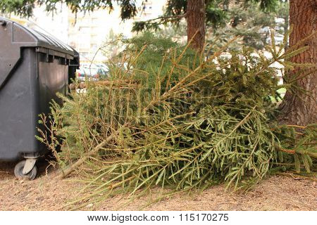 Discarded Christmas tree - Christmas is over