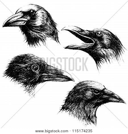 Crow head drawing line work vector