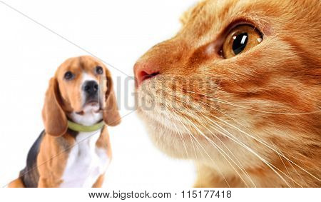Cat and dog, isolated on white