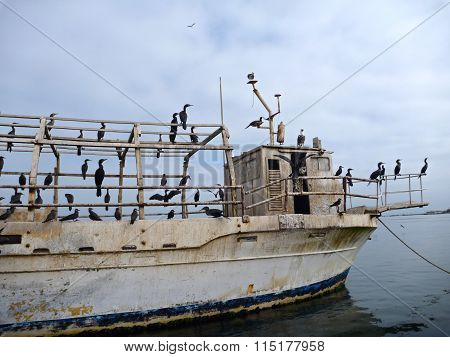 Old Abandoned Boat Full Of Seagulls