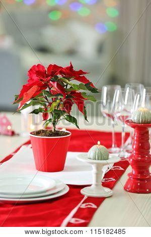Christmas flower poinsettia on table, on lights background