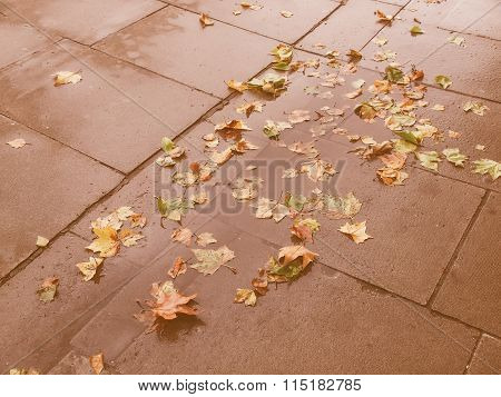 Retro Looking Leaves On Pavement