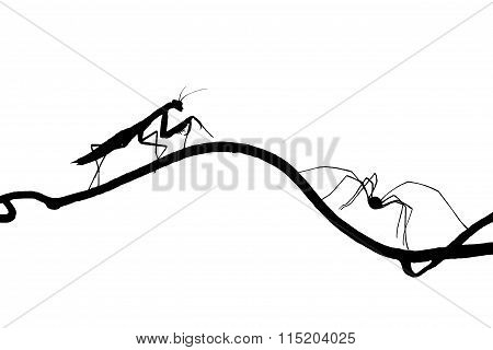 The Silhouettes Of The Praying Mantis And The Spider On Slender Twig . Isolated On White