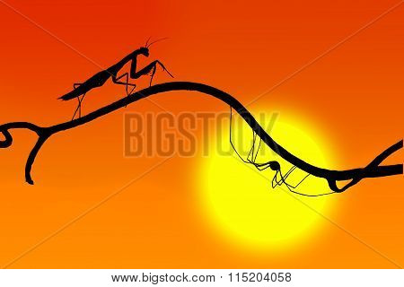 The Silhouettes Of A Graceful Praying Mantis And The Spider On  Fine Twig On The Backdrop Of The Set