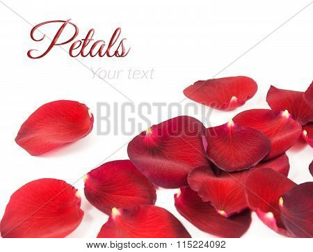Beautiful Red Rose Petals On A White