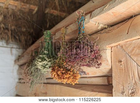 Dried Flowers Hang In The Old Barn. Nature
