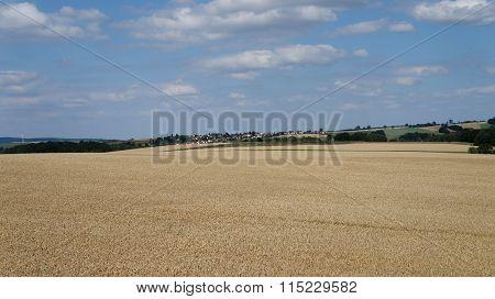 View over a grain field