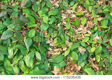 Green And Yellow Leaf Background