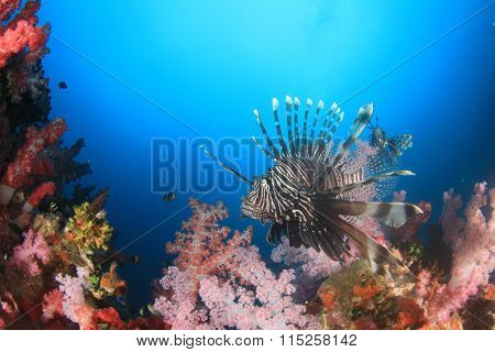 Lionfish coral reef underwater