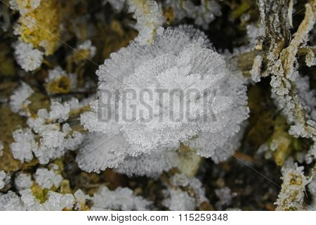 Top view of small white ice crystals flowers and leaves forming on the ground. The frost flowers is also named ice blossoms