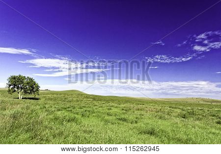 Lone Tree on a Hay Meadow with Blue Sky #1