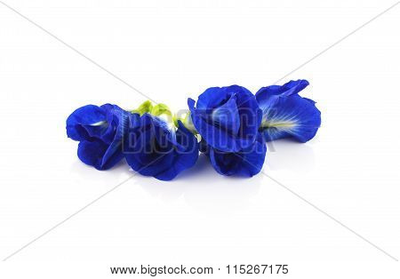 Clitoria Ternatea Also Known As The Butterfly Pea Flower, Used For Food Coloring. Unsharpened File