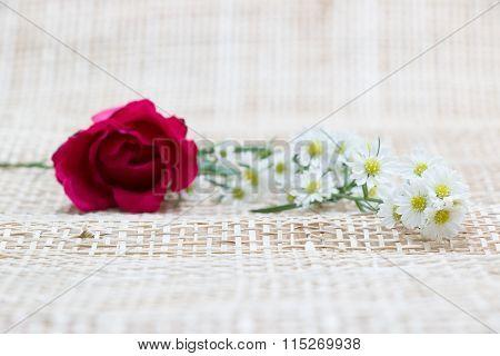 Focus Red Rose, In Concept Flower Backgroud