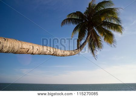 palm over blue sky
