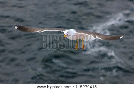 Seagull Over The Sea Waves
