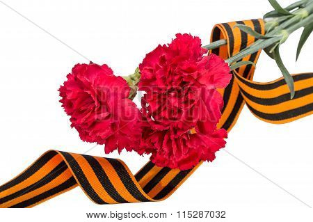 Carnation And St. George Ribbon On White Background