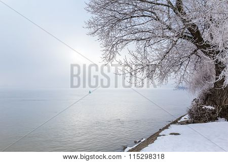 Snow Covered Tree Near The River