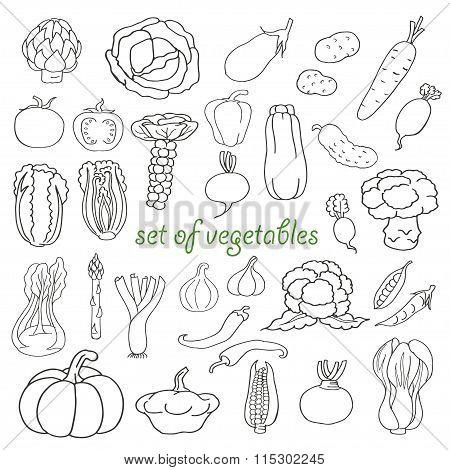 Doodle set of vegetables
