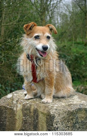 Dog sitting on stone