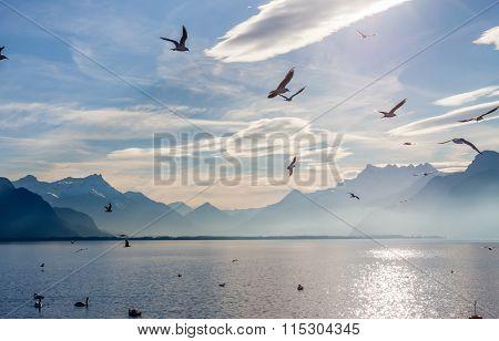View on Alps and Geneva lake