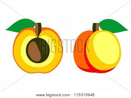 Vector fruits illustration. Detailed icon of apricot whole and half isolated over white background.
