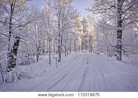 Snowy Road In Winter