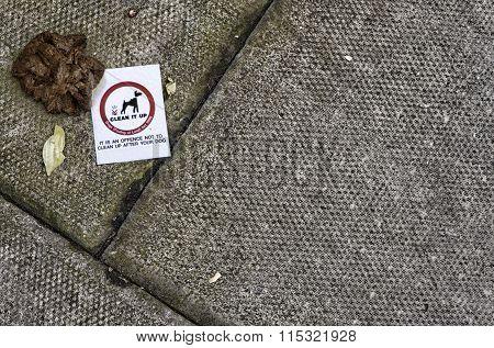 Dog Feces along a Public path