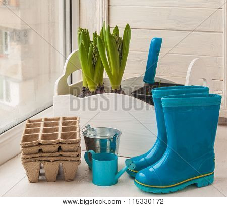 Spring Still Life With Rubber Boots And Hyacinths With Buds