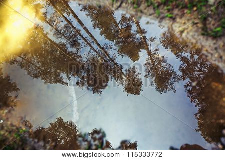 Forest In The Spring With Trees Reflection In A Puddle