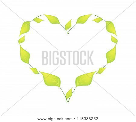 Green Leaves In A Beautiful Heart Shape