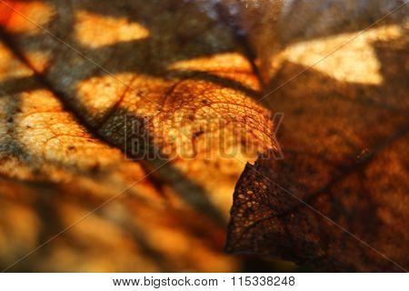 Golden leaf details