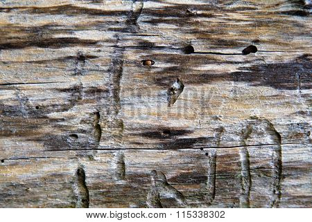 old weathered wood texture with cracks and traces of worms