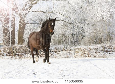 Brown Mare In Snow