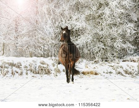 Brown Horse In The Snow