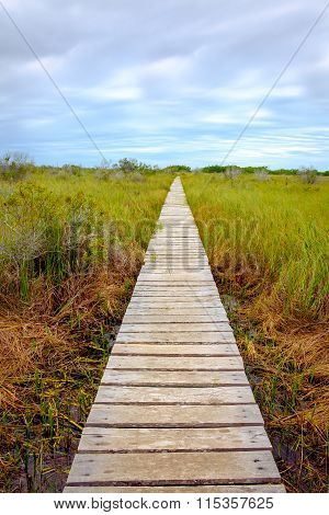 Wooden Boardwalk In Swamp Covered By Greed Grass