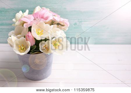 White And Pink  Tulips And Narcissus Flowers  In Grey  Bucket