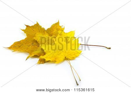 Yellow Leaf Isolated On White